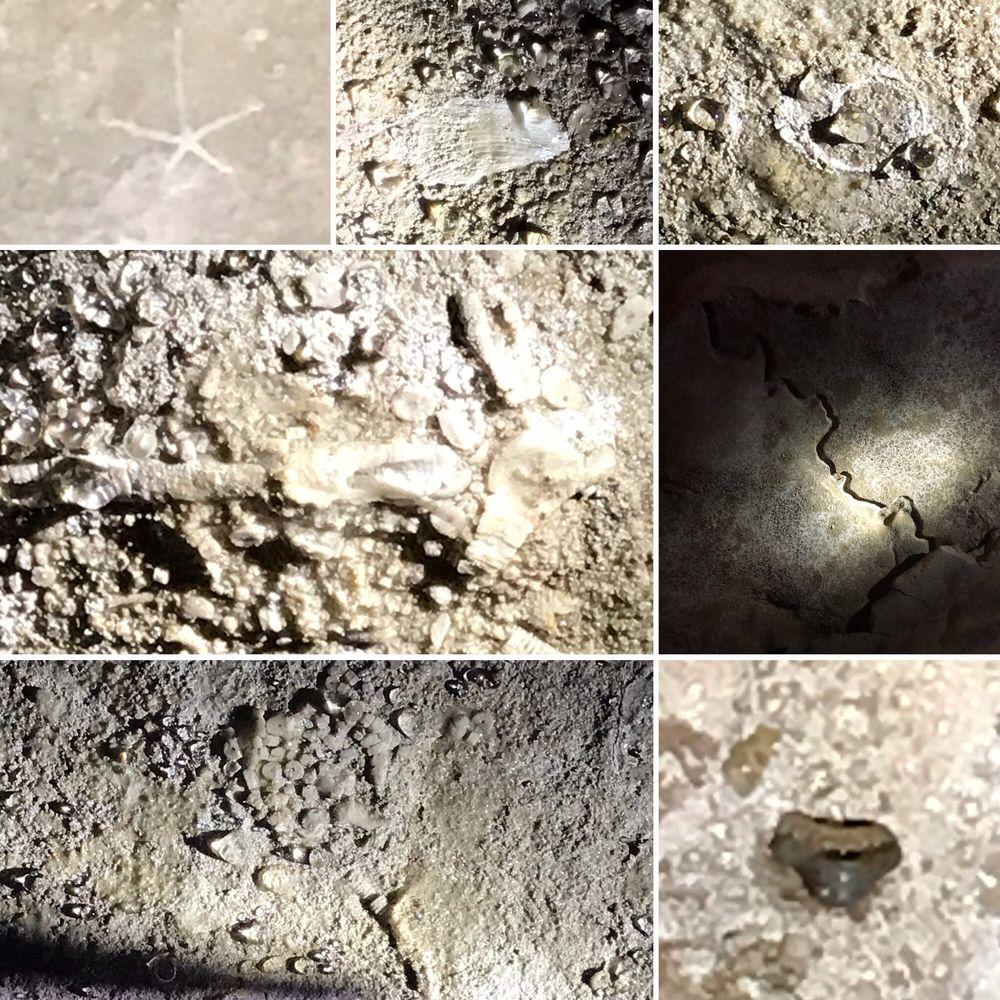 Smallin Civil War Cave: 3575 N Smallin Rd, Ozark, MO
