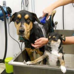 Muddy paws diy dog wash 30 photos 38 reviews pet groomers photo of muddy paws diy dog wash vancouver wa united states solutioingenieria Gallery