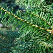 JTB U-Cut Christmas Trees - Temp. CLOSED - 19 Photos - Christmas ...