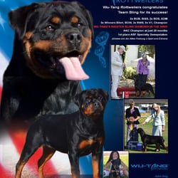 Wu Tang Rottweilers Pet Stores 5727 66th St Sacramento Ca