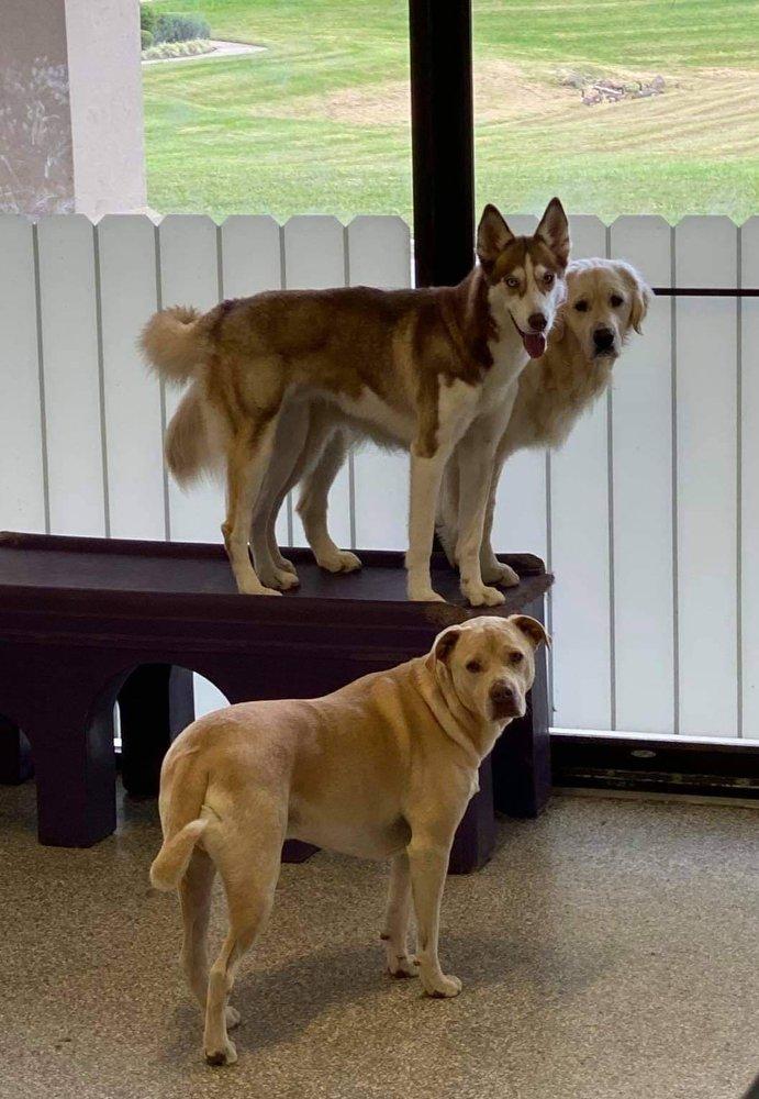 Pet Craze: 18013 Forest Rd, Forest, VA