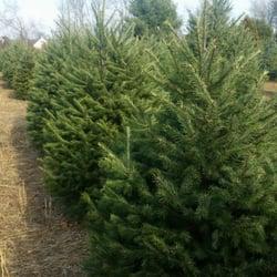 Photo Of Mclaughlin Tree Farm Christmas Trees Nursery Robbinsville Nj