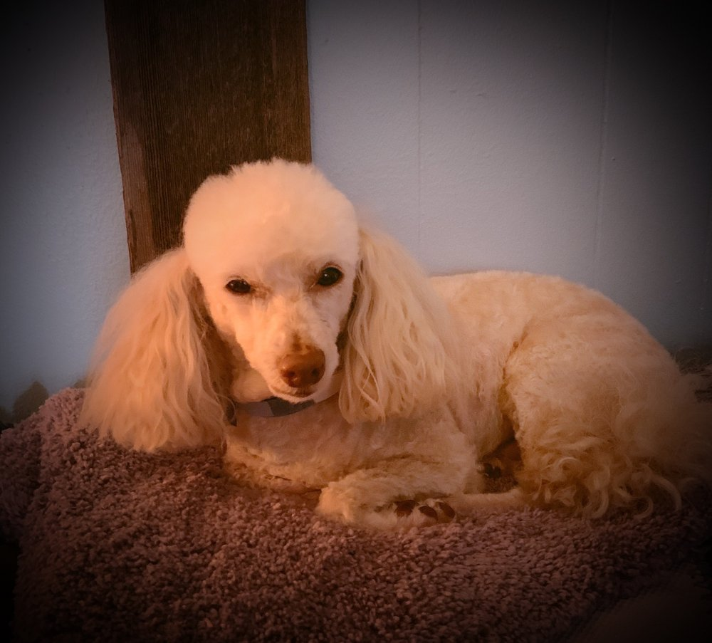 Pampered Pets Grooming Salon: 311 S 1st St, Copperas Cove, TX