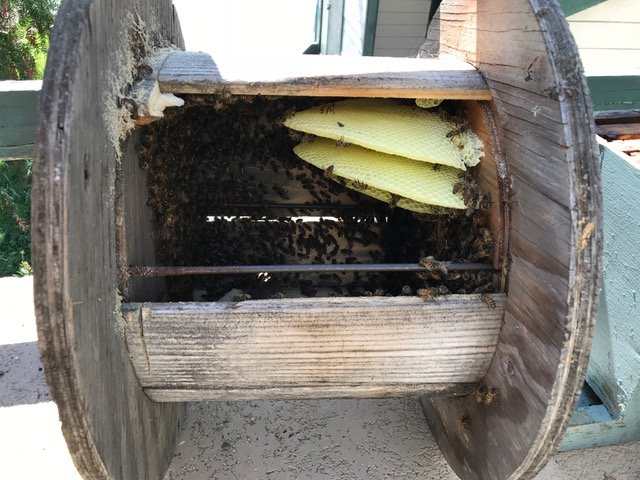 Backyard Bees: Orange, CA