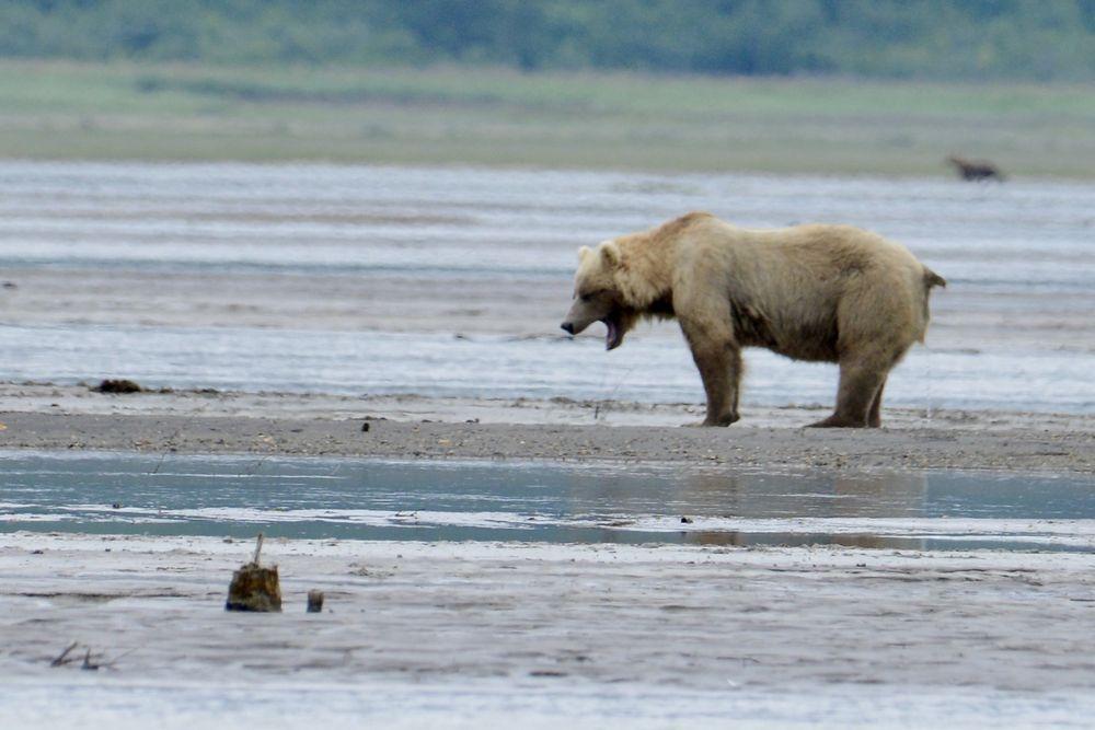 Alaska Ultimate Safaris: 3929 Brown Bear Lp, Homer, AK