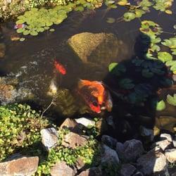 Photo Of Magic Garden   Tucson, AZ, United States