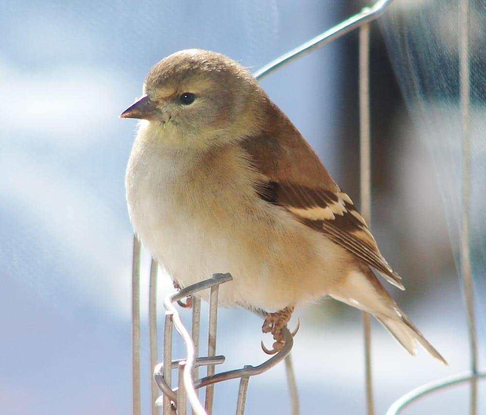 The Bird Man: Franktown, CO