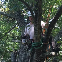 Houston Tree Service 17 Photos 15 Reviews Services 5518
