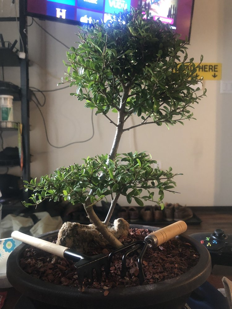 Bonsai Creations Colorado: 1615 County Rd 308, Dumont, CO