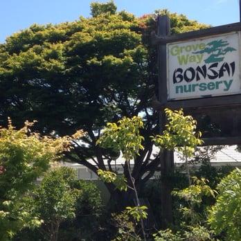 Photo Of Grove Way Bonsai Nursery Hayward Ca United States