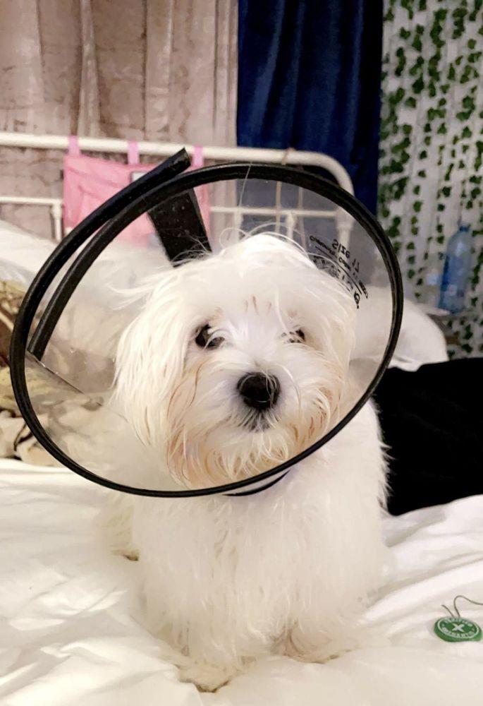 Burke Veterinary Clinic: 6401 Shiplett Blvd, Burke, VA