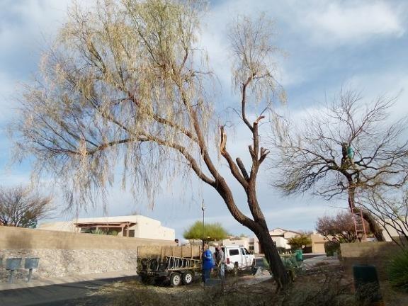 Fisher's Landscape Service: 845 W Calle Catavinos, Tucson, AZ