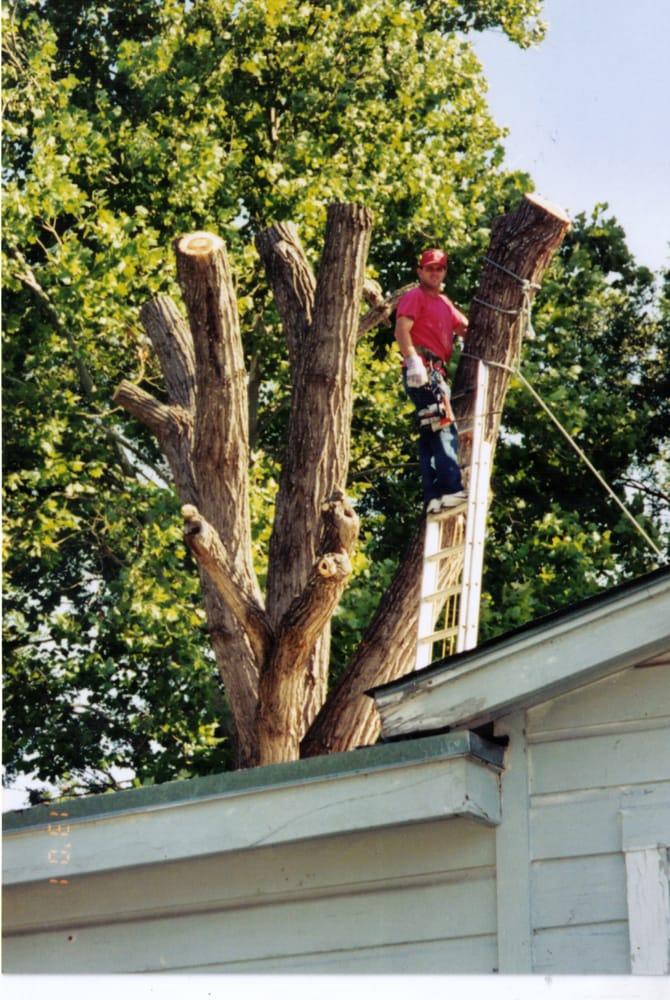 J R Ash Tree Company: 948 Curry Lp, Belton, TX