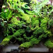 Aquascapes Gallery.
