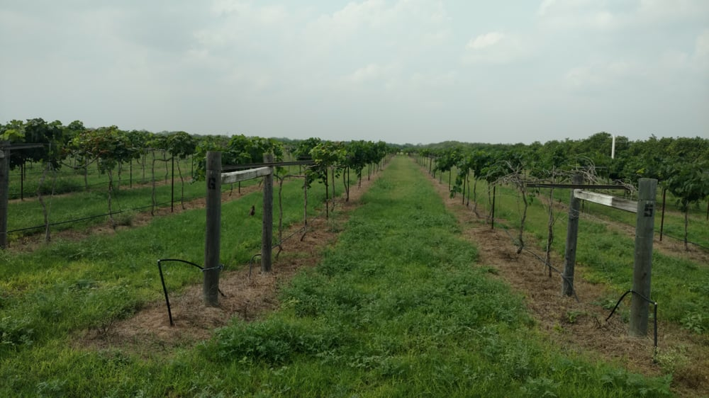 Jaber Estate Winery: 22283 N Western Rd, Edinburg, TX