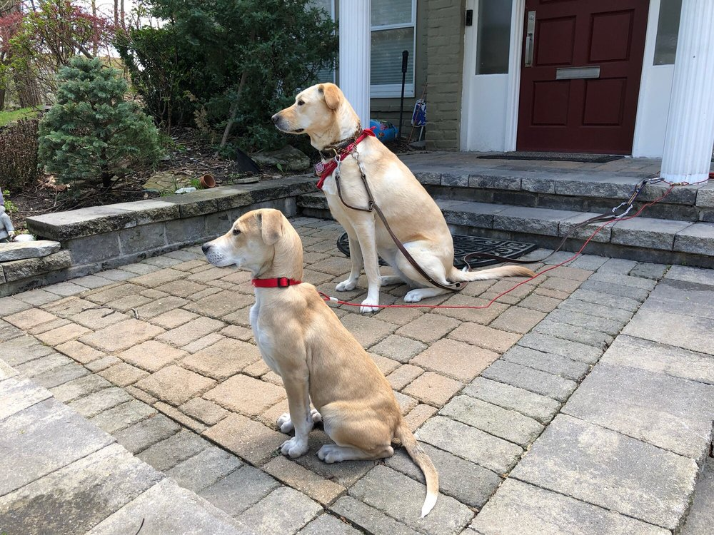 Pet Sitters Club: 2 Spruce St, Great Neck, NY
