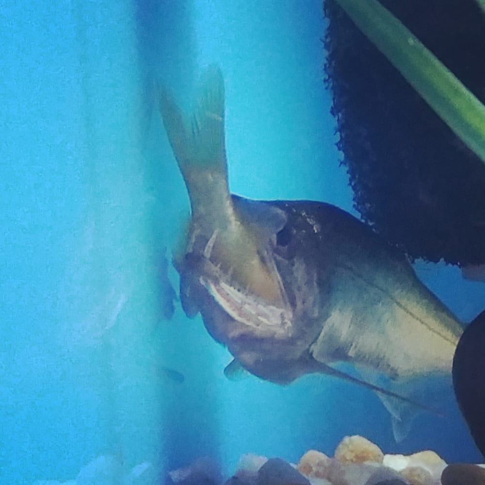 photos for bob 39 s tropical fish yelp