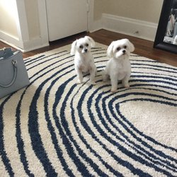 All about the dogs 15 photos 37 reviews pet groomers 207 photo of all about the dogs columbus oh united states solutioingenieria Gallery