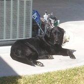 Chatsworth Ca Kennel Dog
