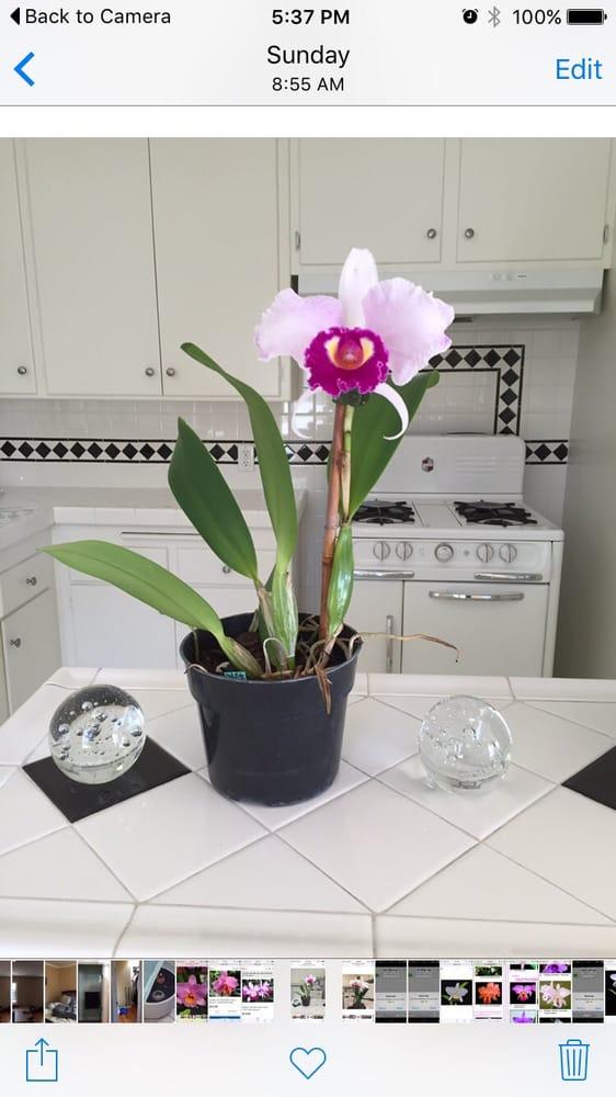 Hamilton Orchids & Plantscapes: Sonoma, CA