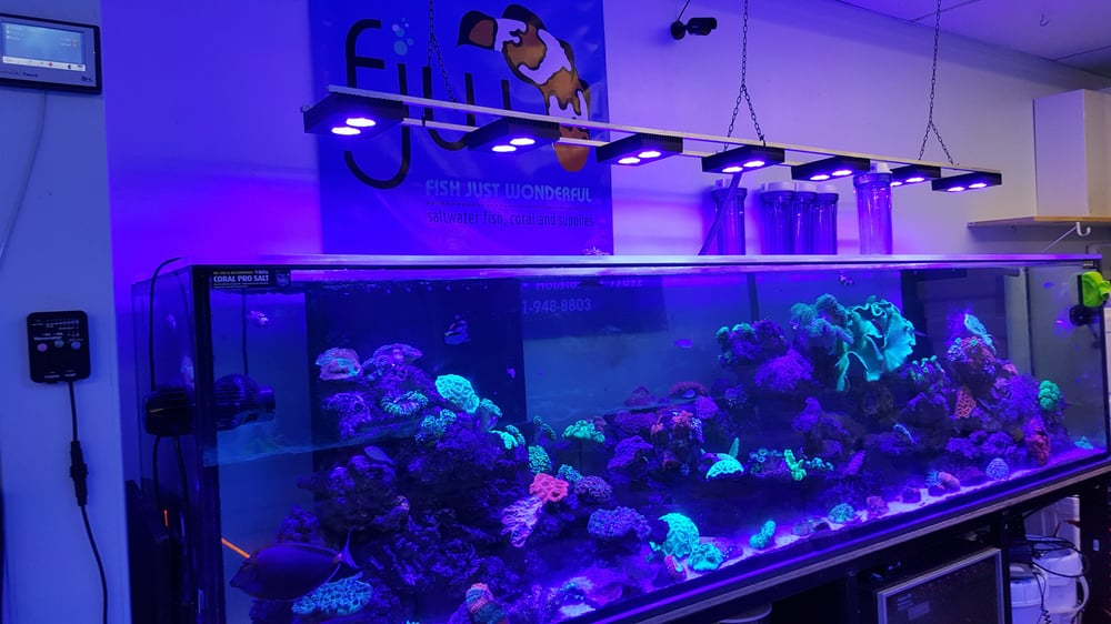 FJW Aquarium: 3839 Mangum Rd, Houston, TX