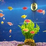 ... Photo Of The Ocean Floor   Phoenix, AZ, United States ...