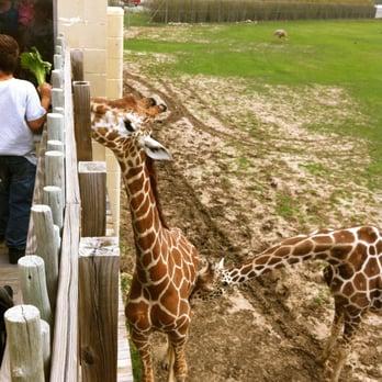 Frank Buck Zoo - 112 Photos & 33 Reviews - Zoos - 1000 W