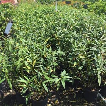 Photo Of Joseph S Nursery Pearland Tx United States Milkweed Jackpot