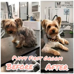 Scissor Me Pretty Dog Grooming Boutique 107 Photos 16 Reviews