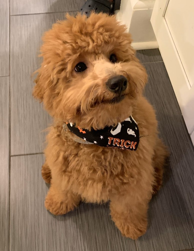 Montclair Pet Grooming: 322 Orange Rd, Montclair, NJ