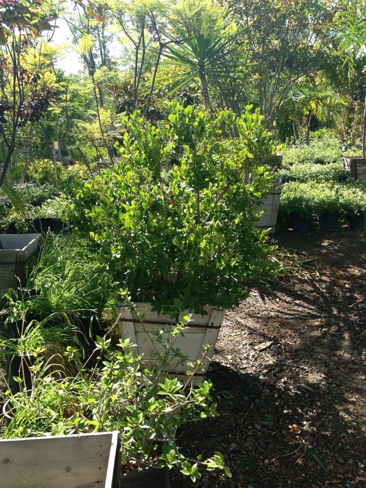 Anaheim Whole Nursery Landscape Supply 16 Reviews Nurseries Gardening 1550 N Glell St Orange Ca Yelp