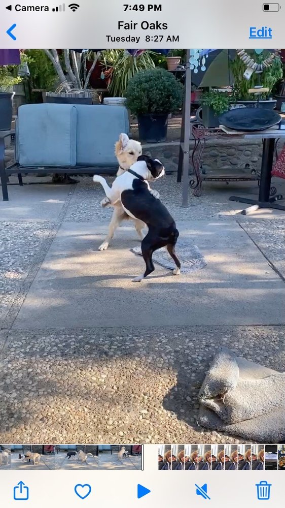 Bow Wows Pet Boarding