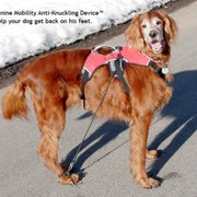 Yelp Reviews for Canine Mobility - 11 Photos - (New) Pet Stores