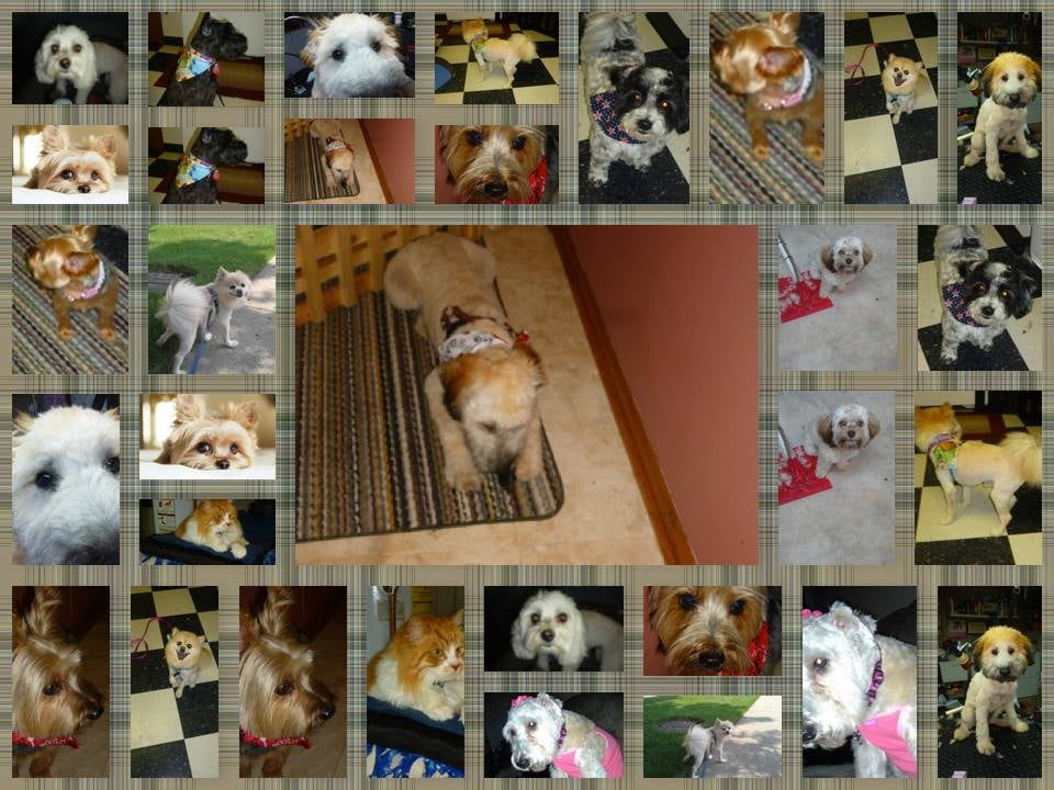 Carol's Pet Pawlour: 760 Colleen Dr, Cary, IL
