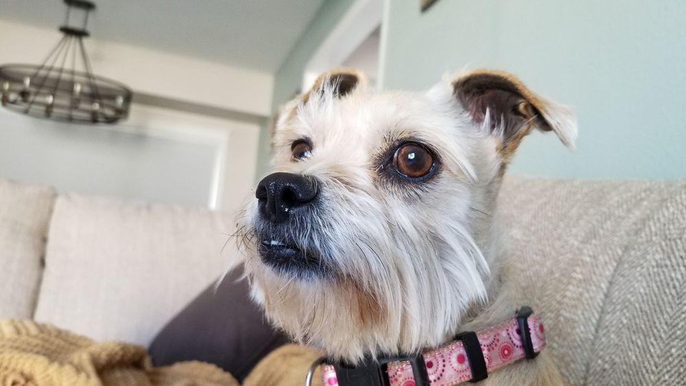Social Spots from San Dimas Dog Park
