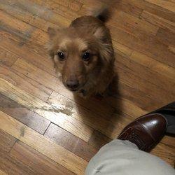 Night In Charleston I Met Katrina Dog >> Ken Caryl Pet Spa 23 Photos 21 Reviews Pet Groomers 12512 W