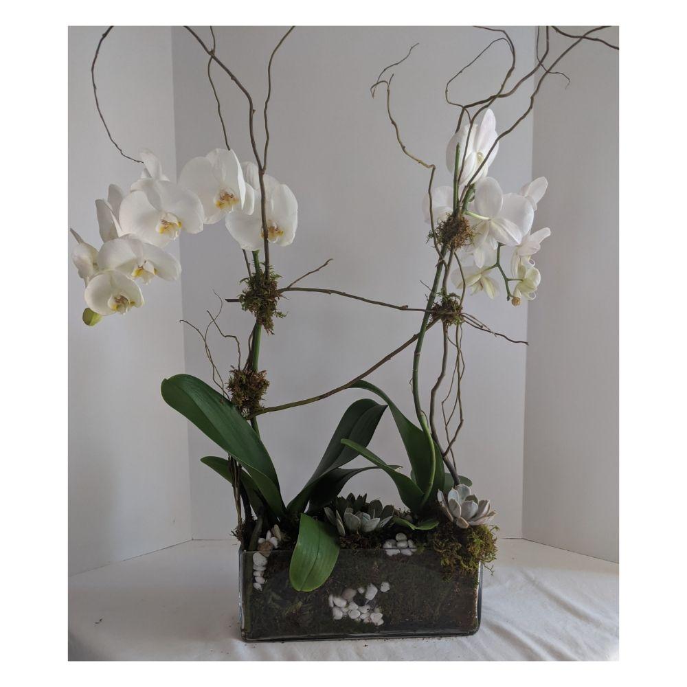 New Mexico Flower Company: 145 Calle Del Presidente, Bernalillo, NM