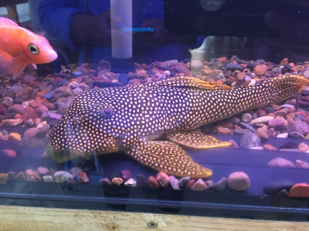Happy fish pets 24 reviews pet stores 799 w imperial for Fish as pets