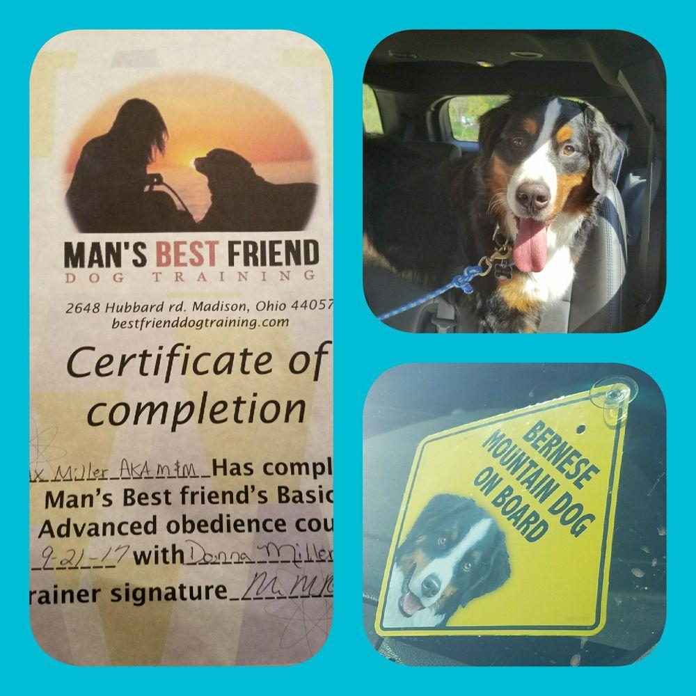 Man S Best Friend Dog Training Madison Oh