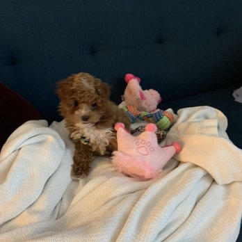 Happytail Puppies - 38 Photos & 19 Reviews - Pet Adoption