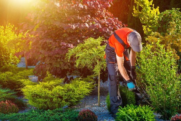 Photo Of Mach Phan Gardening And Landscaping   San Diego, CA, United States.