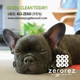 Zerorez Puget Sound 66 Photos Amp 60 Reviews Carpet