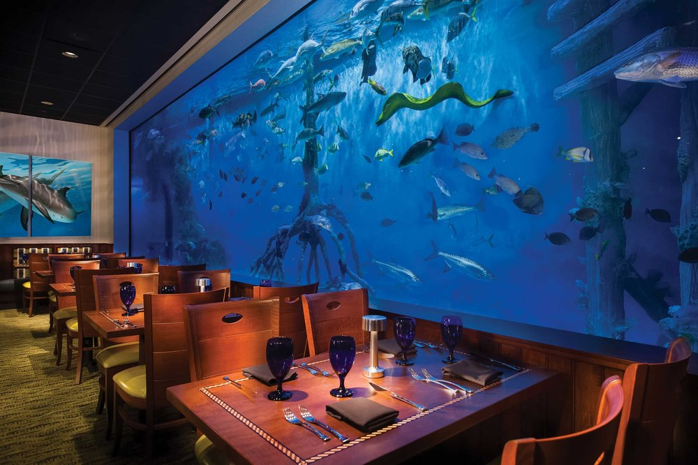 Swim with the Fish at RumFish Grill: 6000 Gulf Blvd, St Pete Beach, FL