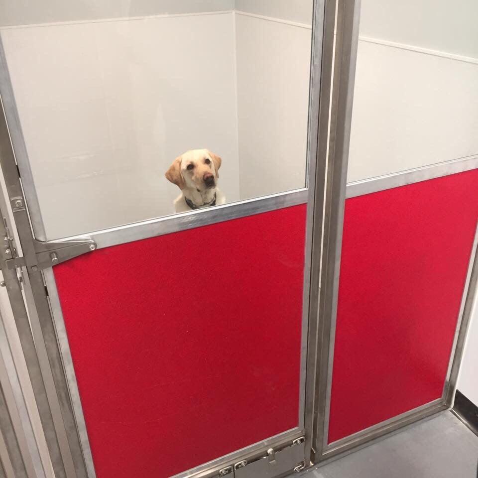 Indulge Pet Resort