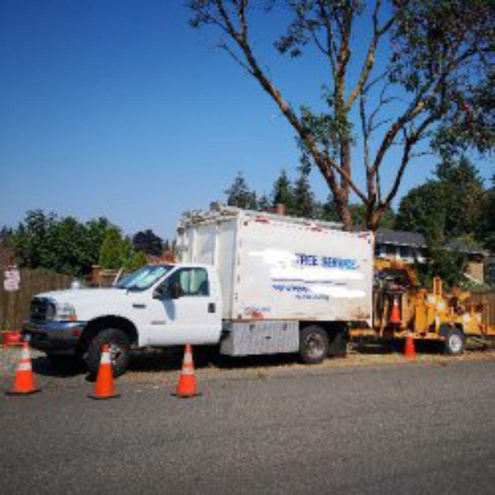 Jed's Tree Service: Carnation, WA