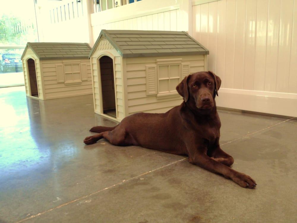 Rough House Dog Daycare
