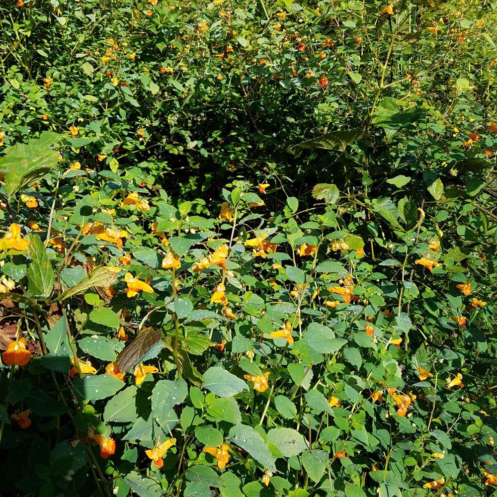 Elliott Woods State Nature Preserve: S Trueblood Pl, Terre Haute, IN