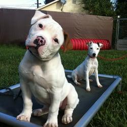 Dog Training Classes North Hollywood