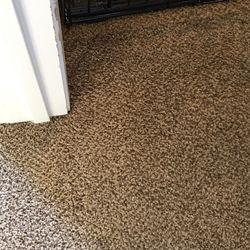 Photo Of The Carpet Doctor Port Orchard Wa United States