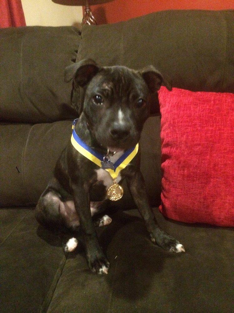 HEX Dog Training & Behavior Modification: 89 Hartford Ave E, Mendon, MA